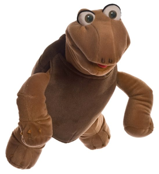 Kleiner Sammy die Schildkröte